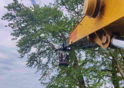 κοπή δέντρων τιμή κλάδεμα με αλυσοπρίονο