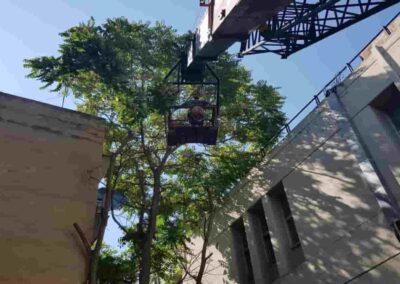 κοπή δέντρου με γερανό θεσσαλονίκη
