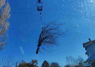 κοπή υψηλών δένδρων τιμές με ανυψωτικό καλάθι